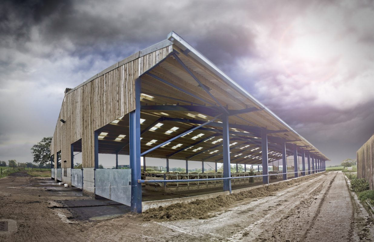 Livestock building. cattle shed. steel frame building