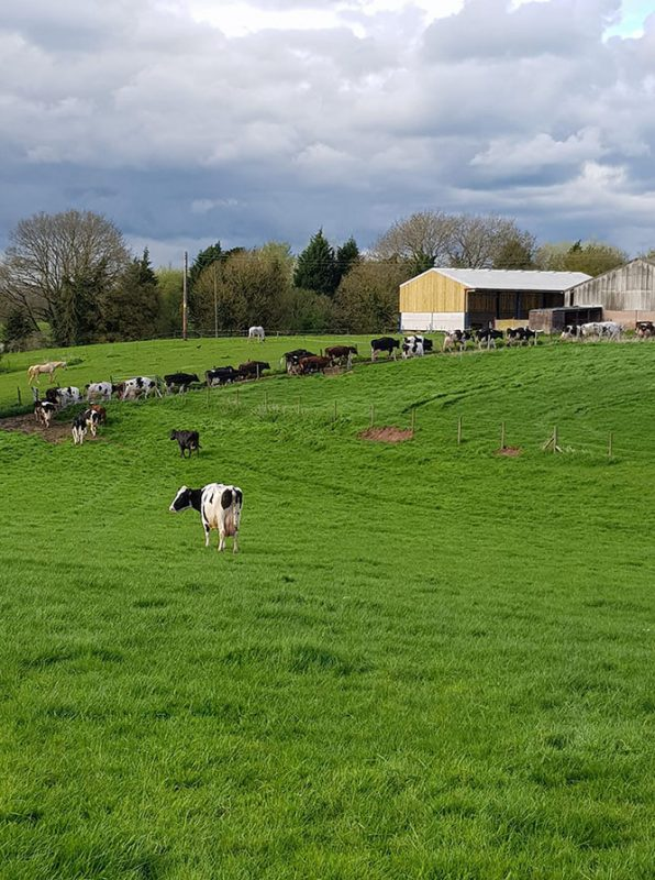 Little Bank Farm Case Study